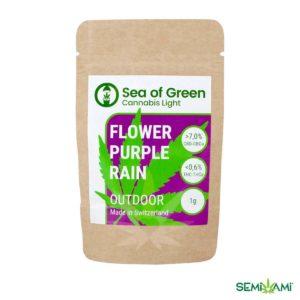 Purple Rain 1g Sea of Green