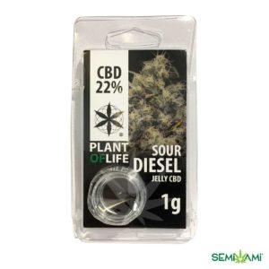 Sour Diesel CBD Plant of Life