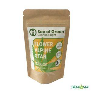 Flower Alpin Star 3 g Sea of Green