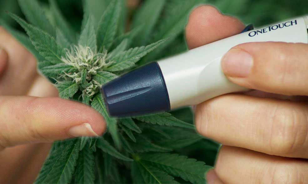 diabete e cannabis